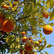 palma-appelsiner